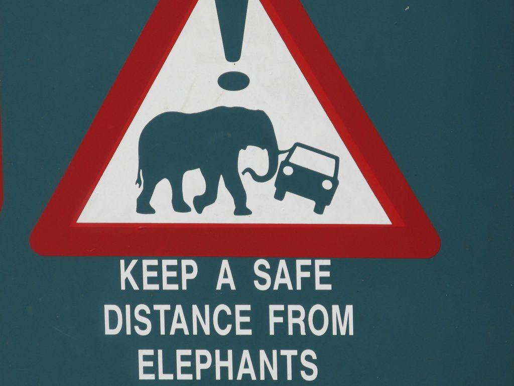 Garder vos distances des éléphants