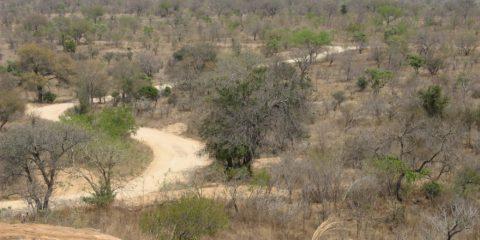 La savane du Parc Kruger