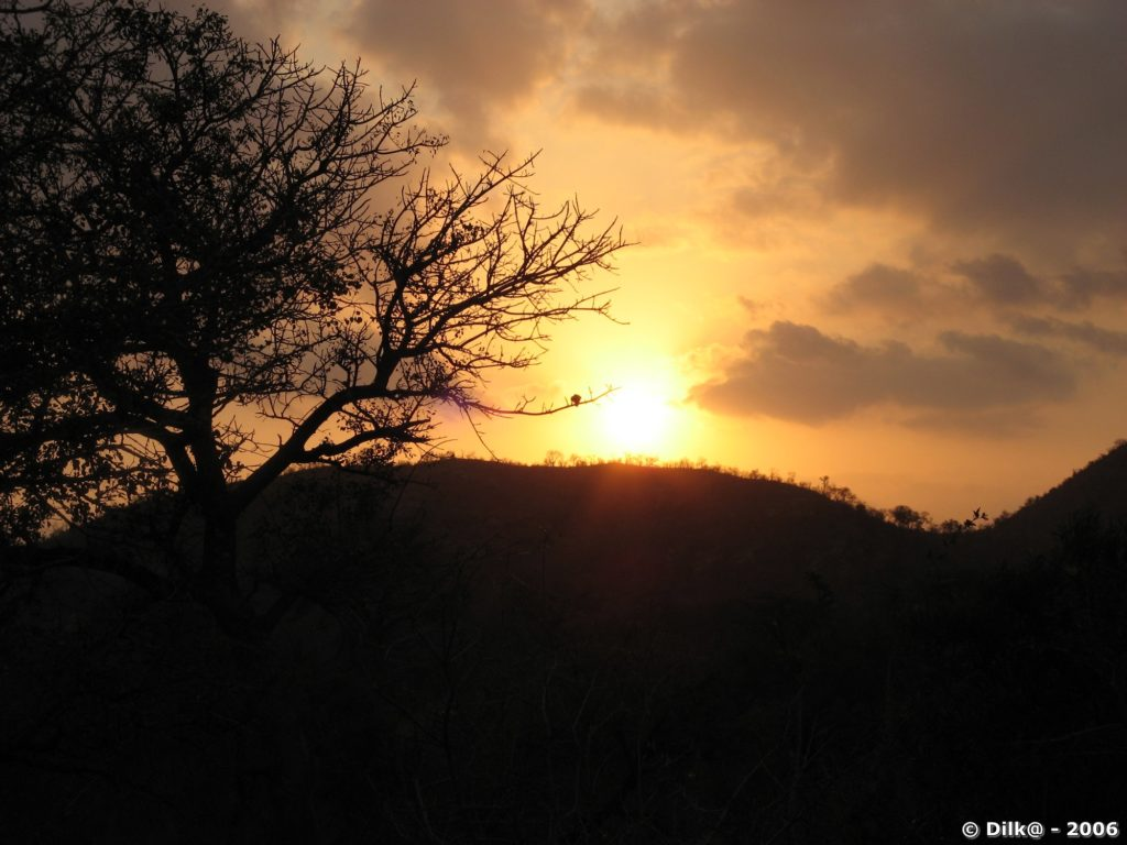 Coucher de soleil sur la savanae