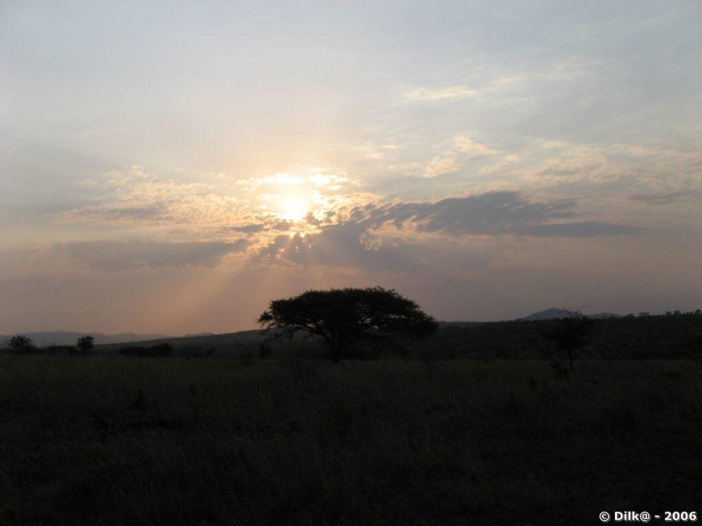 Lumières du soir dans le Zulu Nyala Park