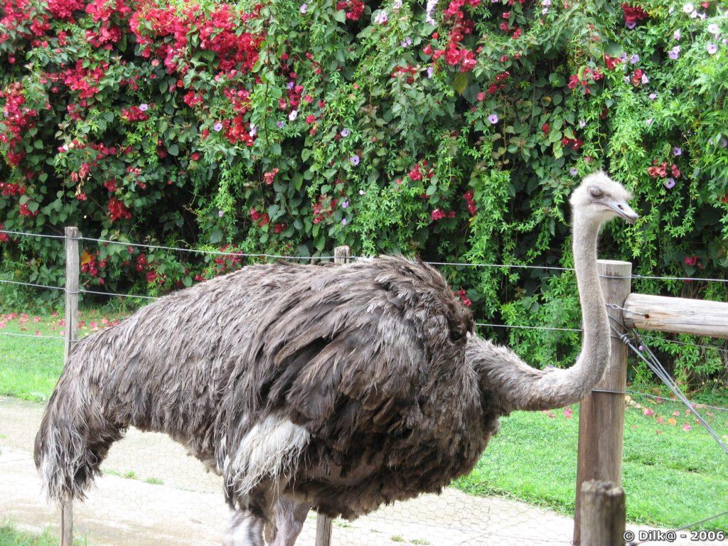 Ostrich Farm (ferme d'élevage d'autruches)