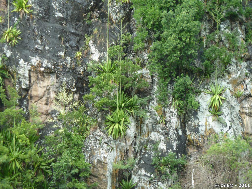 la végétation est très dense autour de la cascade