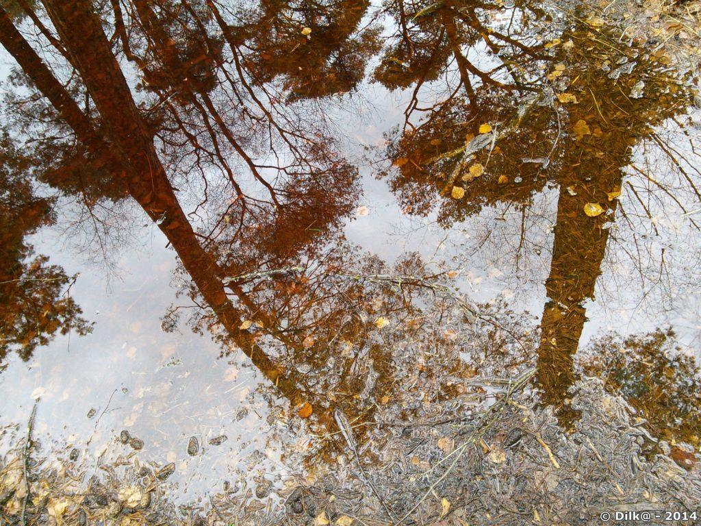 Les reflets dans la mare à Piat