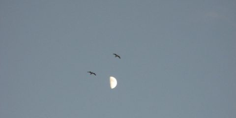 La lune et les goélands