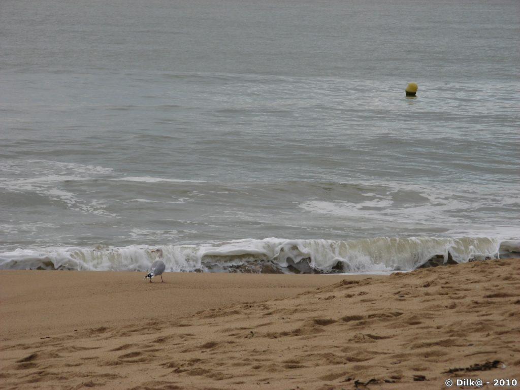 Un goéland hardi qui approche les fortes vagues