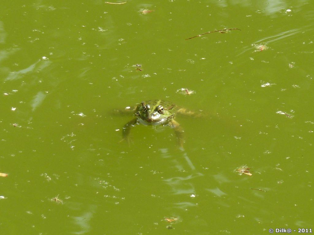 la grenouille qui se dore au soleil