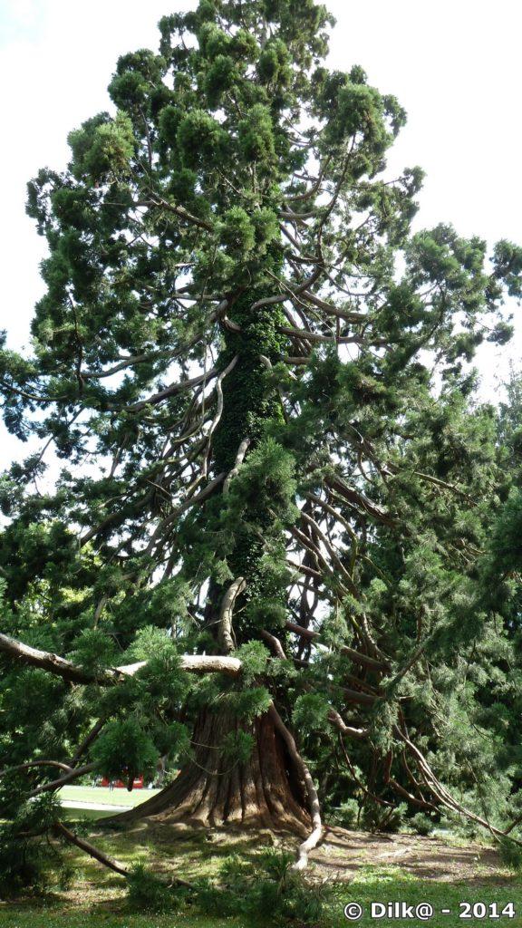 Toutes les branches de cet arbre vont vers le bas