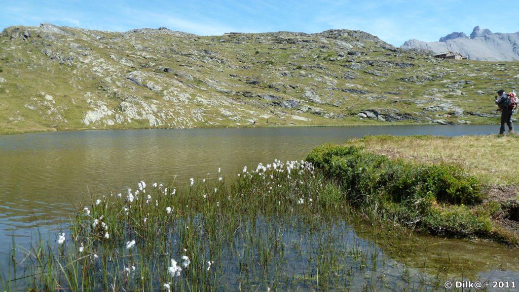 Le Lac Blanc, la linaigrette (petite fleur blanche) et le pêcheur