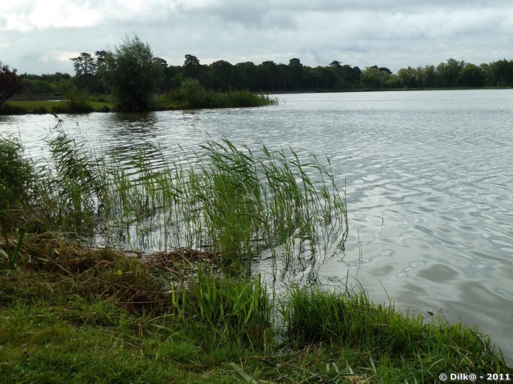 L'étang des Noës