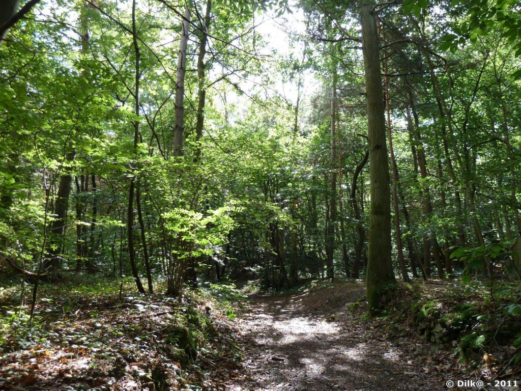 Le chemin traverse de belles forêts