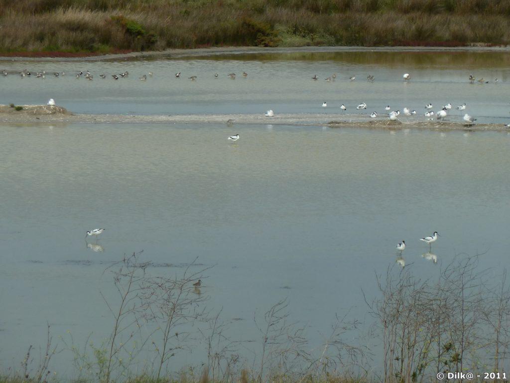 Les oiseaux dans les marais
