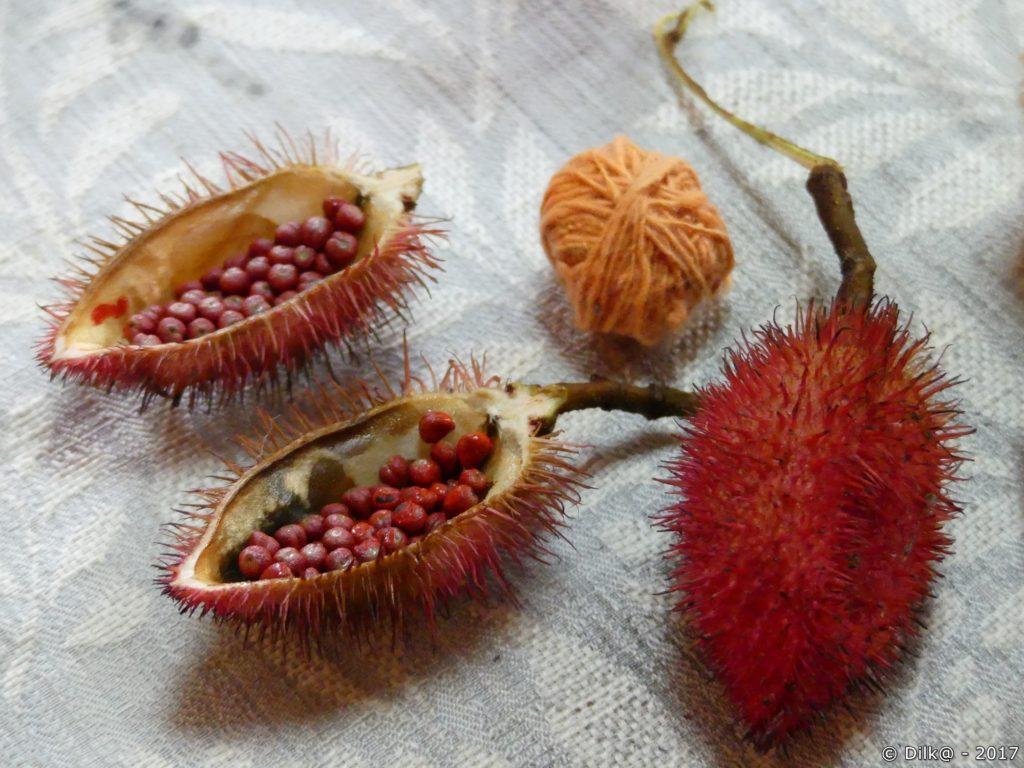 graines de fruit pour le orange