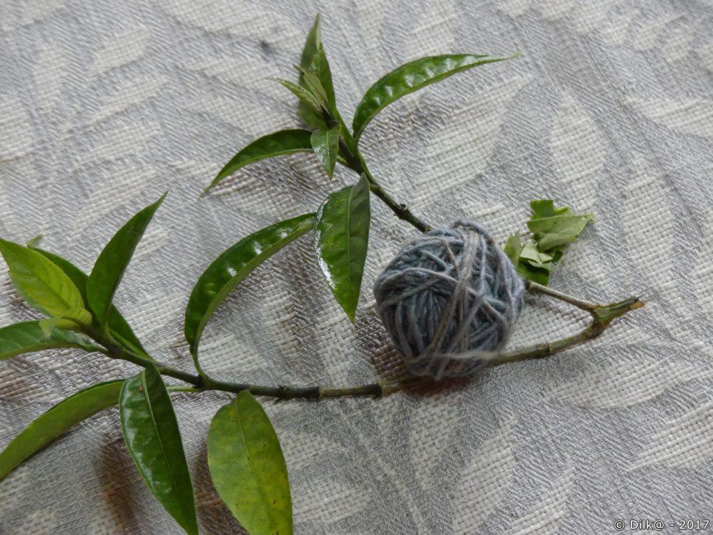 feuilles pour le bleu