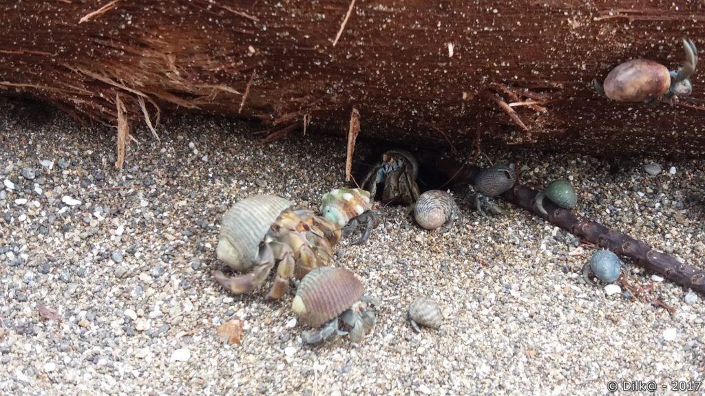 bernard l'hermite sur la plage de caño