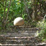sphère de diquis