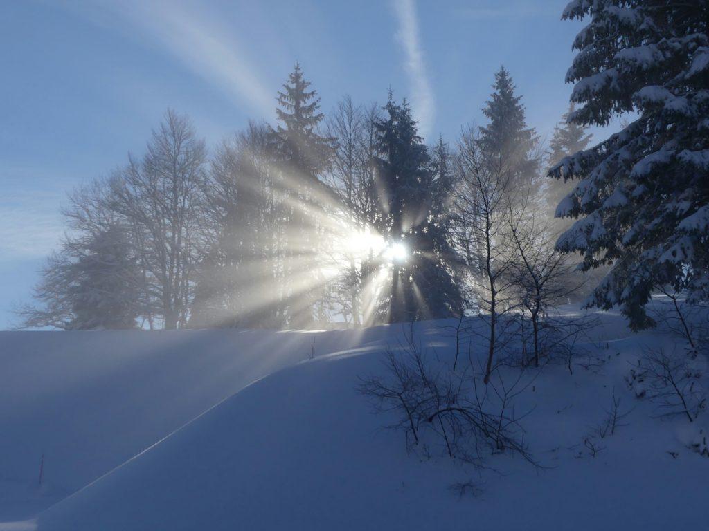 Lever du soleil derrière les sapins
