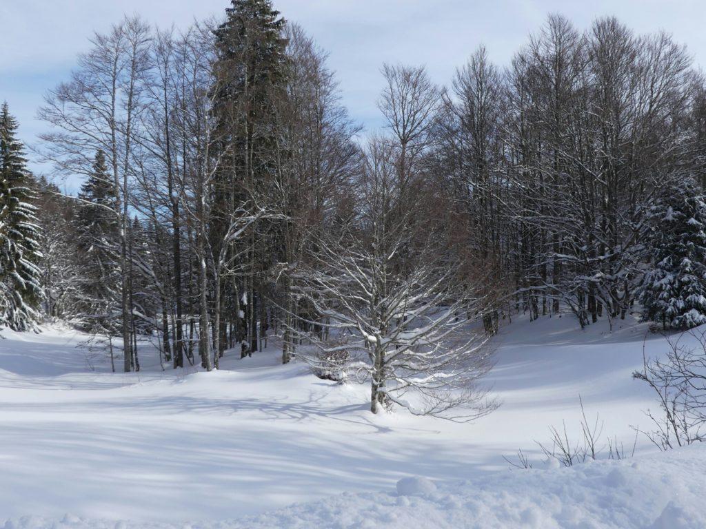 Petite combe dans la forêt du Risoux