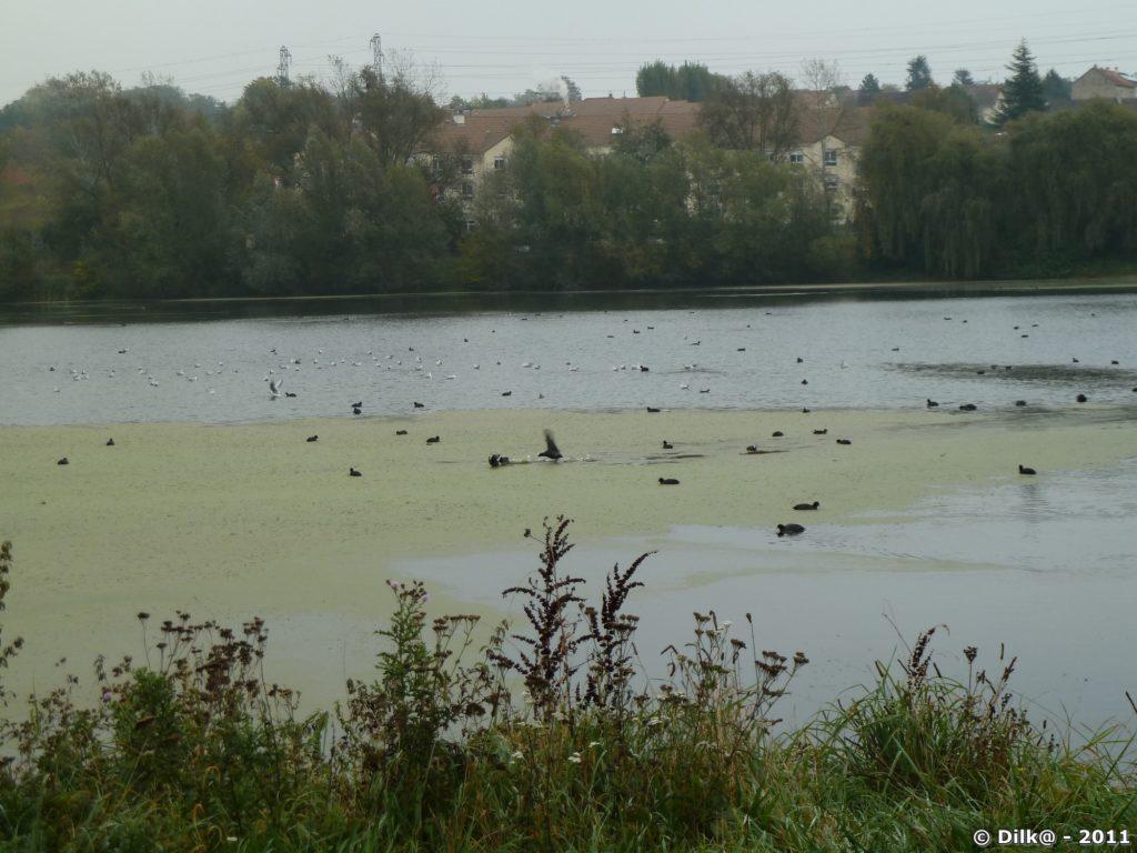 Bassin du Carouge