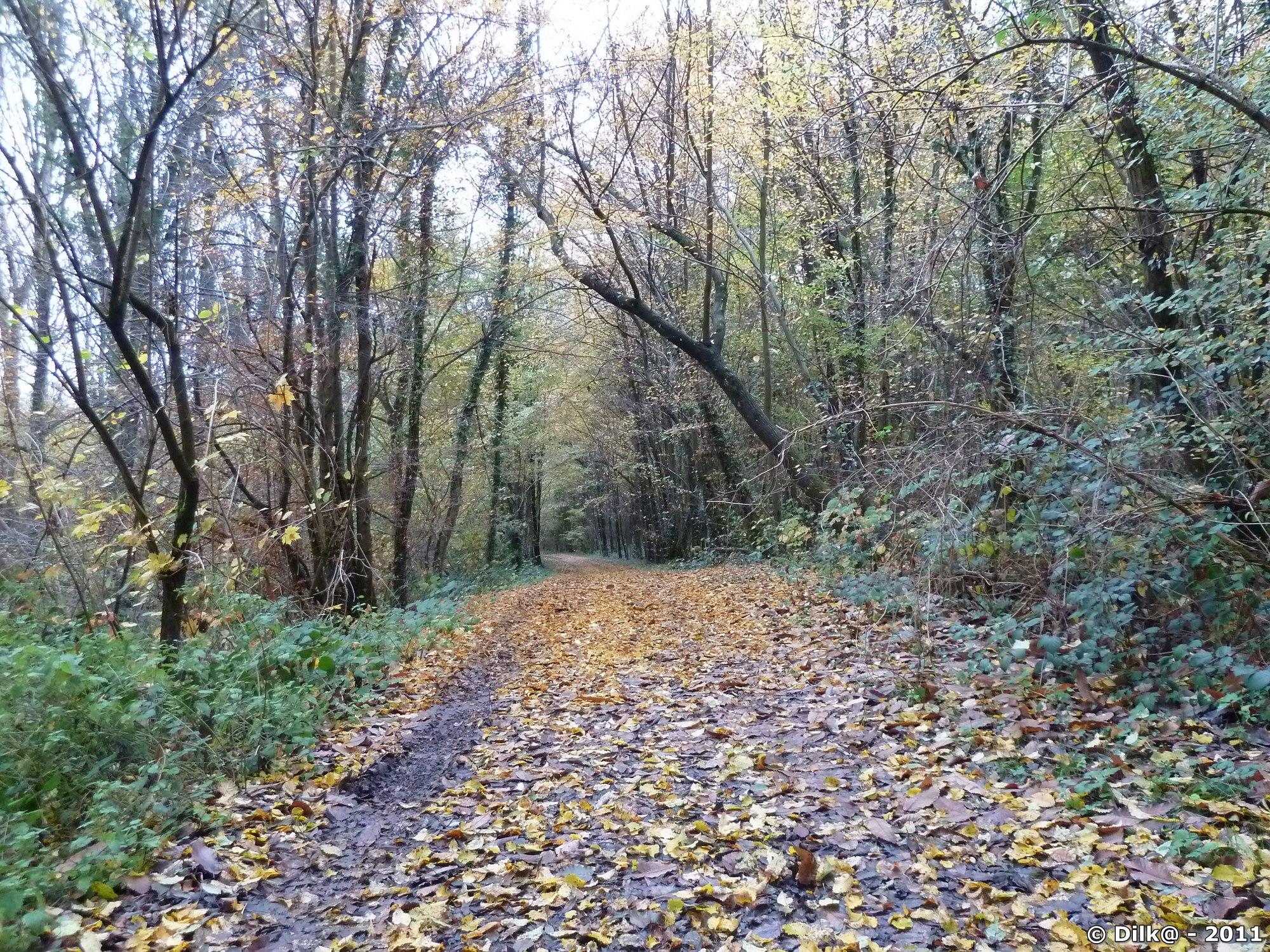 La forêt aux couleurs d'automne