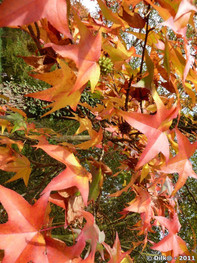 Le feuillage en automne