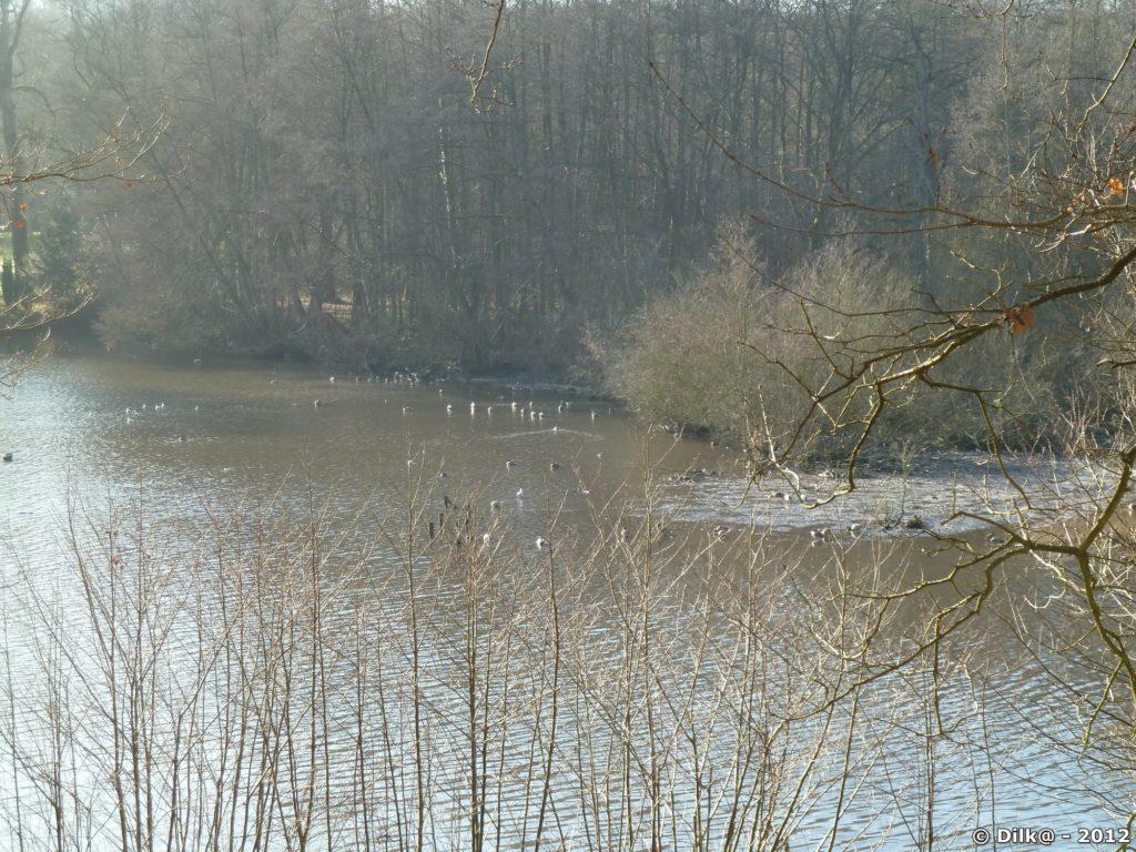 L'étang est gelé par endroit