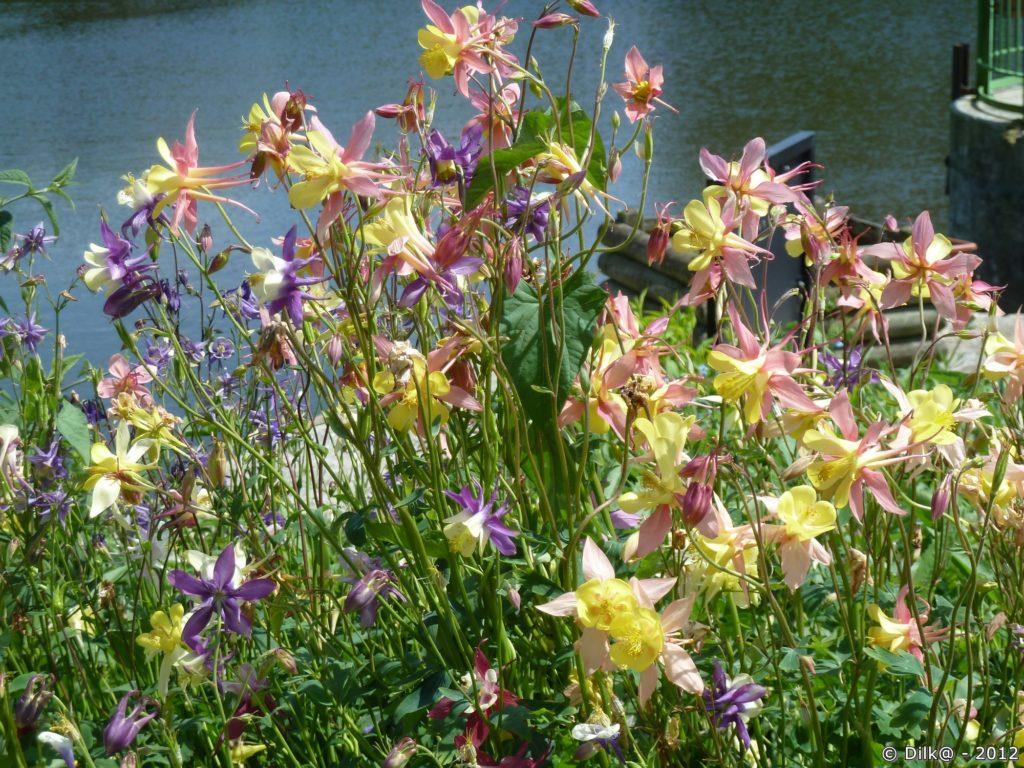 Les jolies fleurs dans le jardin d'un éclusier