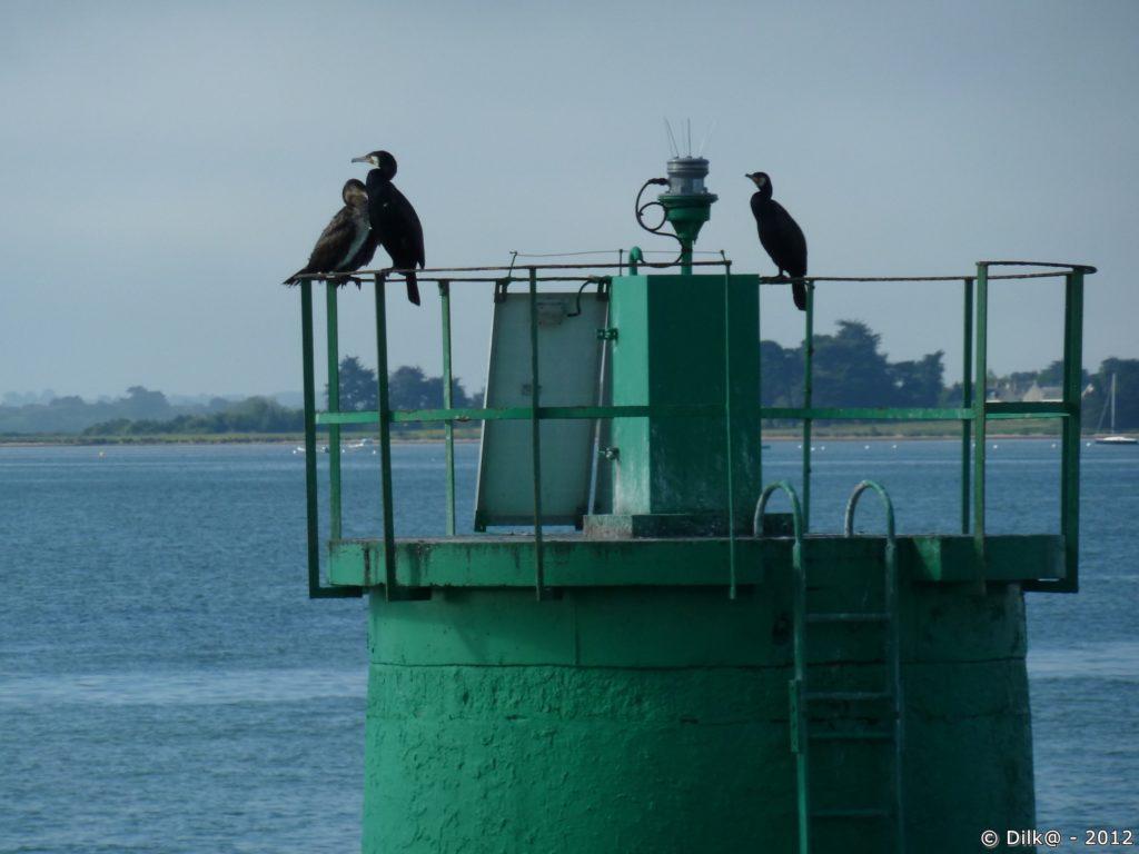 Cormorans sur une balise au milieu du golfe du Morbihan