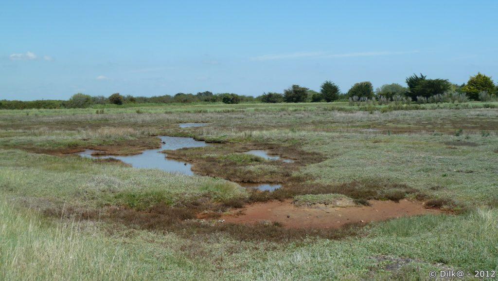 Marais salants de Billihervé