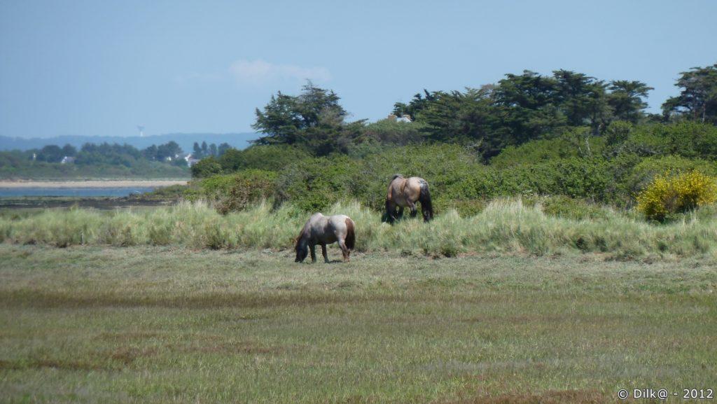 Chevaux dans le marais
