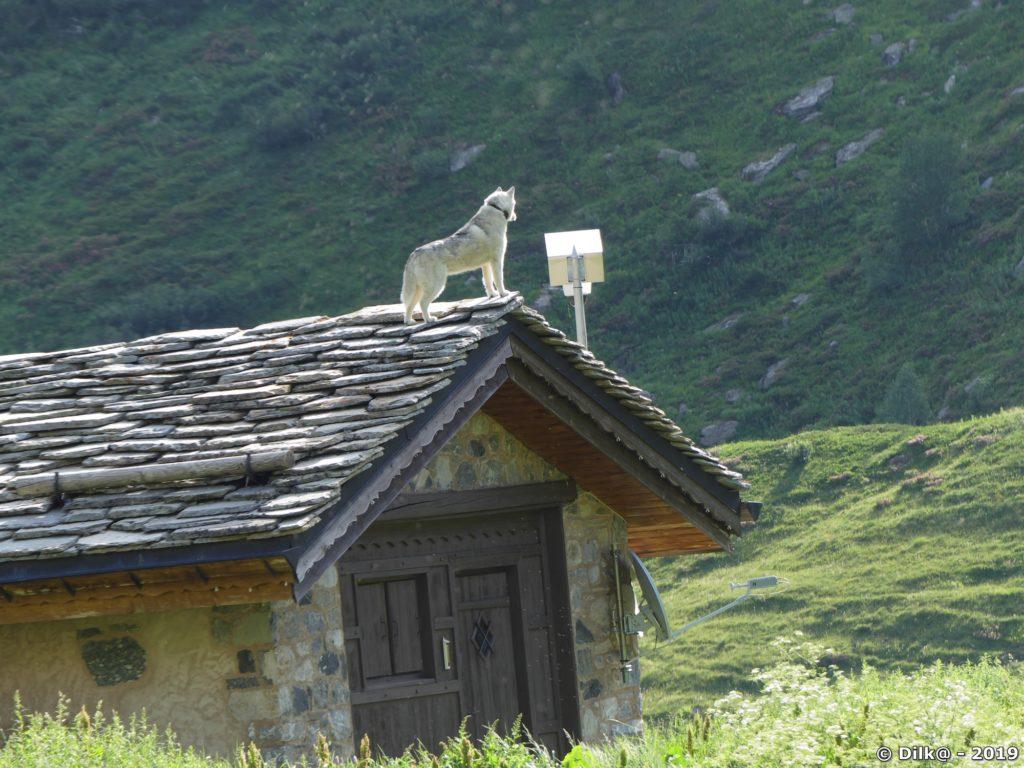 Le chien monté sur le toit du refuge du Roc de la Pêche