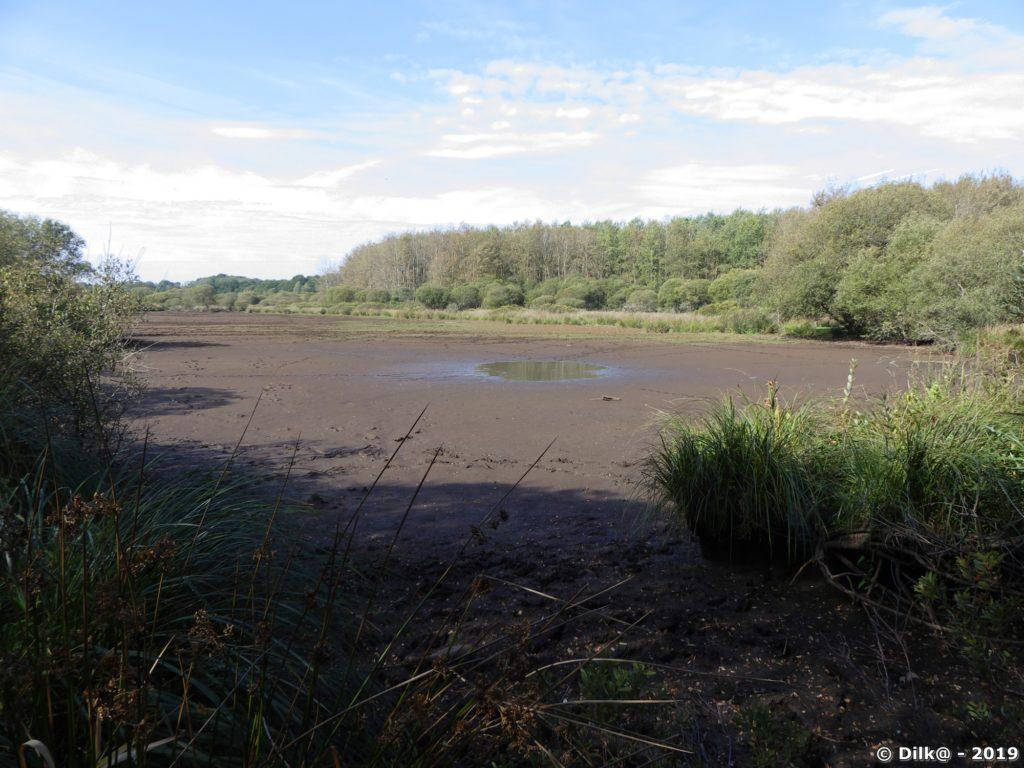 Il ne reste plus beaucoup d'eau en Brière avec cette sécheresse