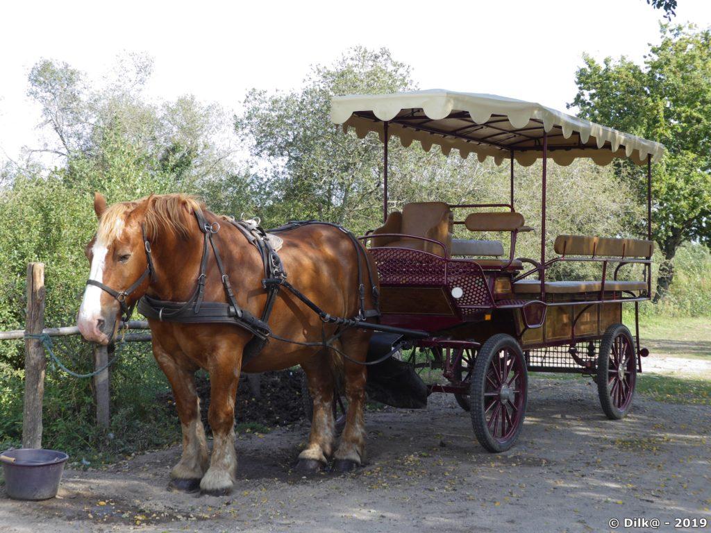 Calèche pour promenade en Brière