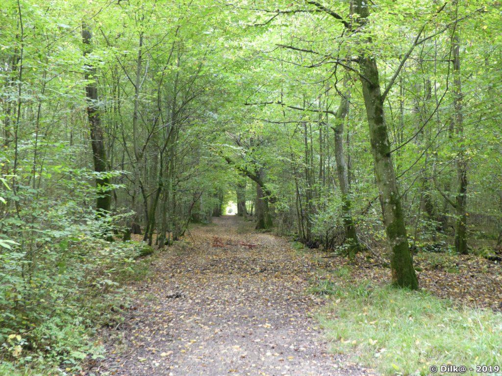La forêt de Malvoisine