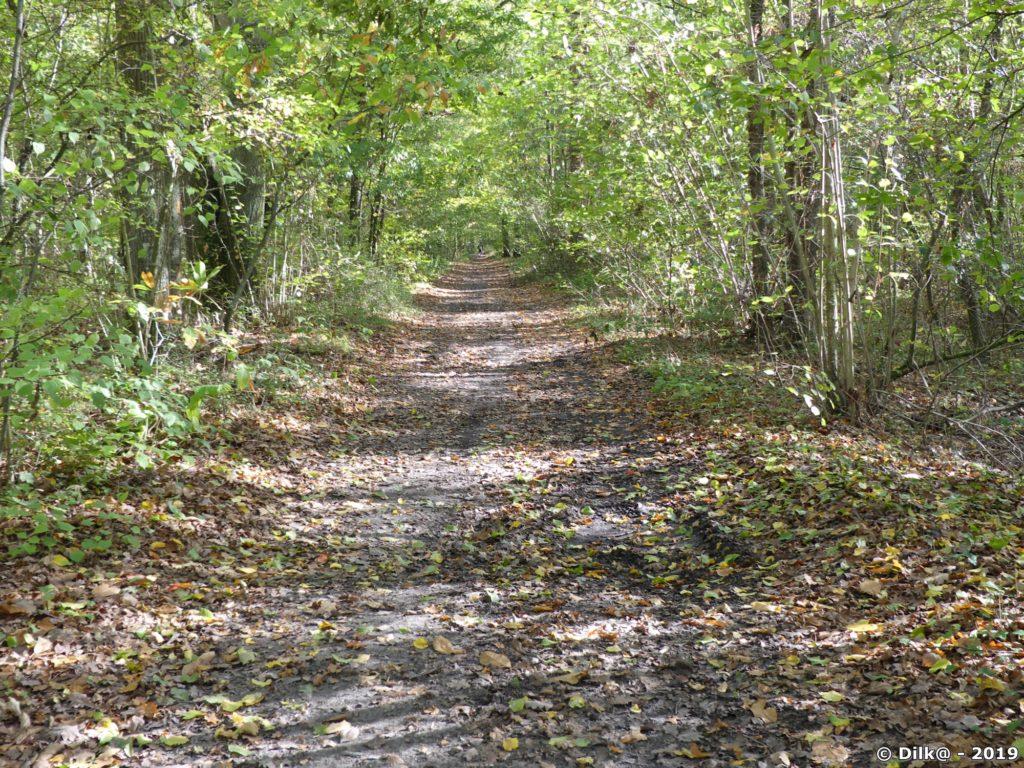 Allée dans la forêt près de Dourdan