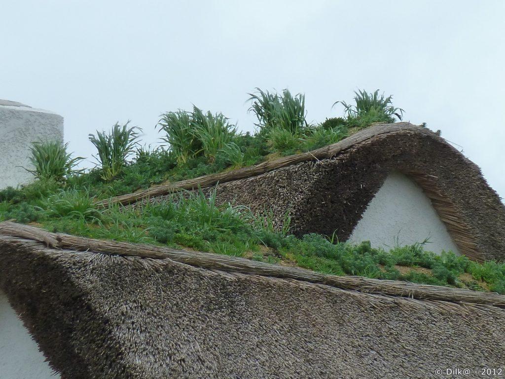 L'herbe pousse sur la toiture de chaume