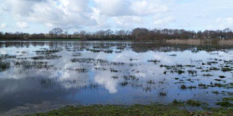 Les prairies inondées en Brière