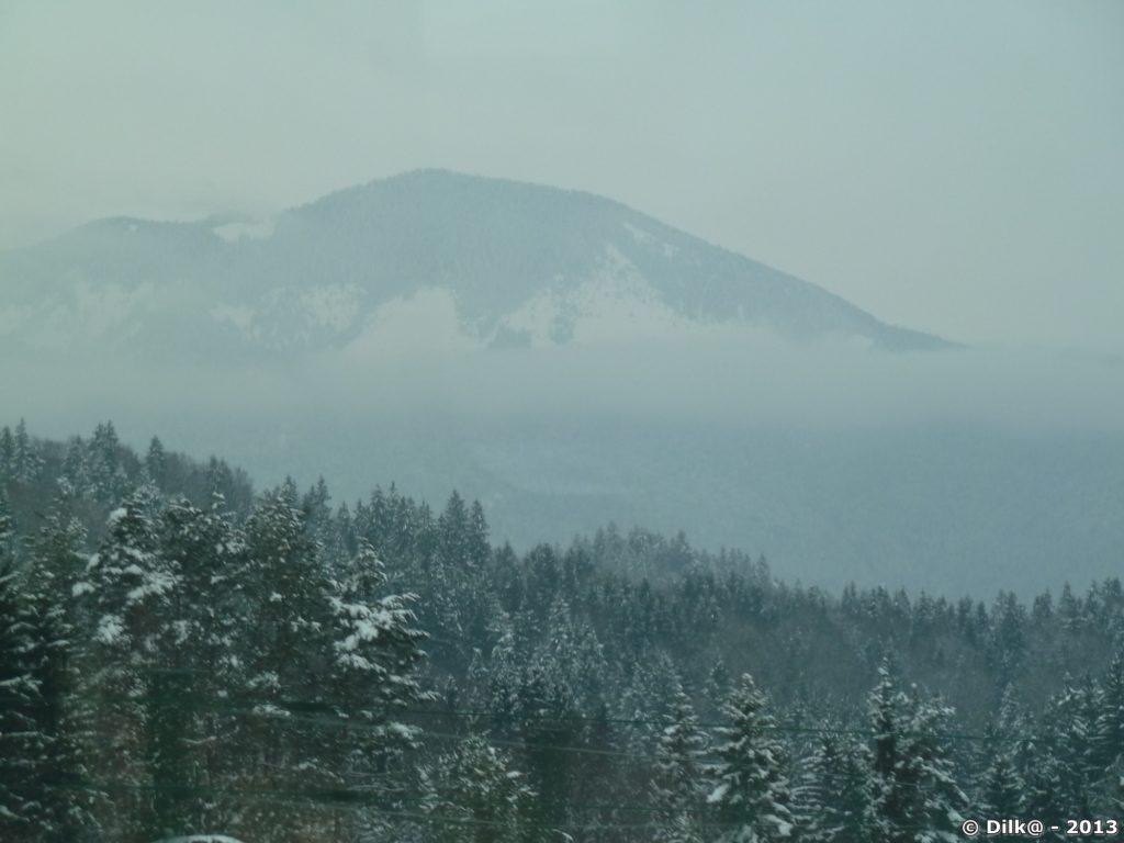 La montagne et les résineux enneigés