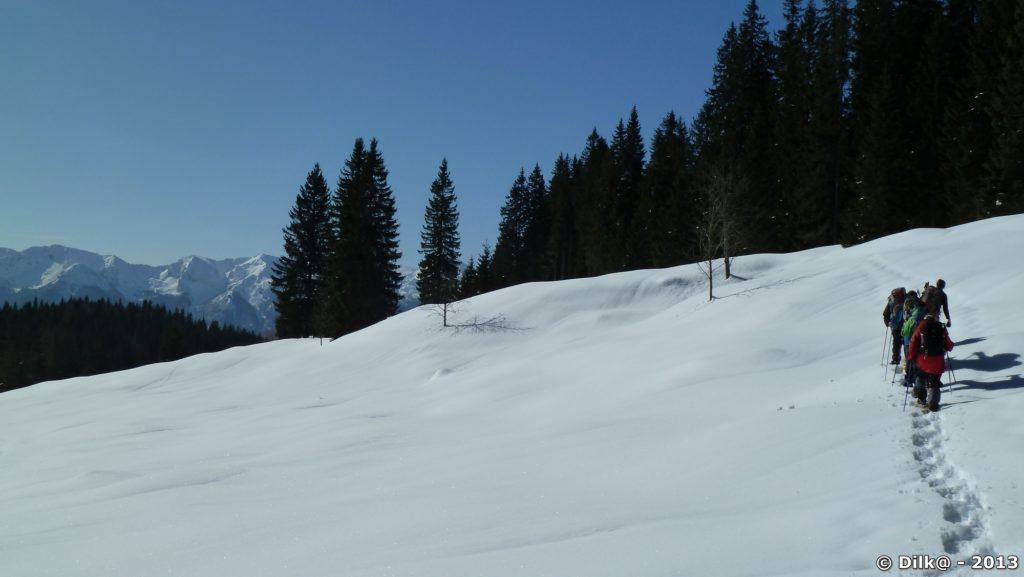Le plateau de Pokljuka