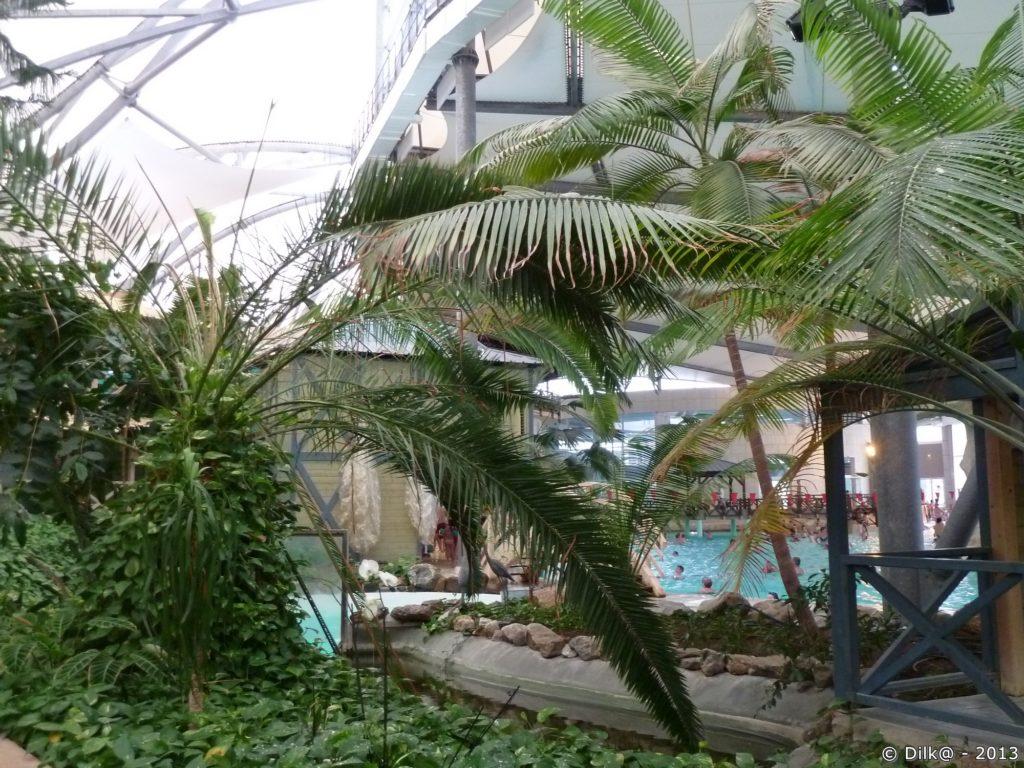 Le jardin tropical autour des bassins