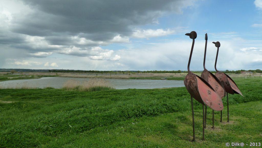 Les cigognes en Charente
