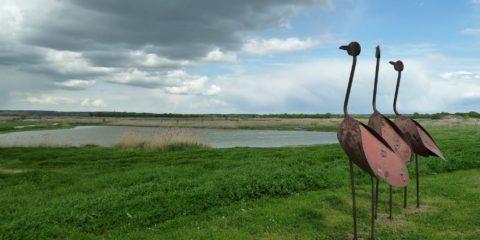 Les cigognes en Charente-Maritime