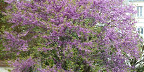 Premières fleurs du printemps