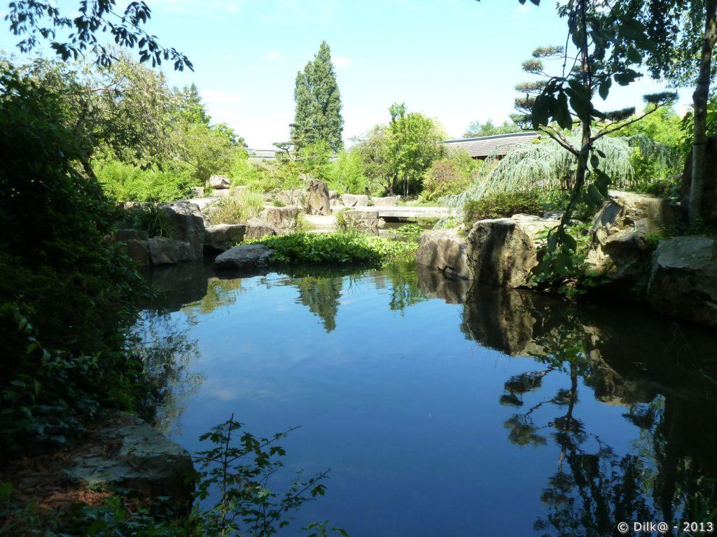Étang du jardin japonnais