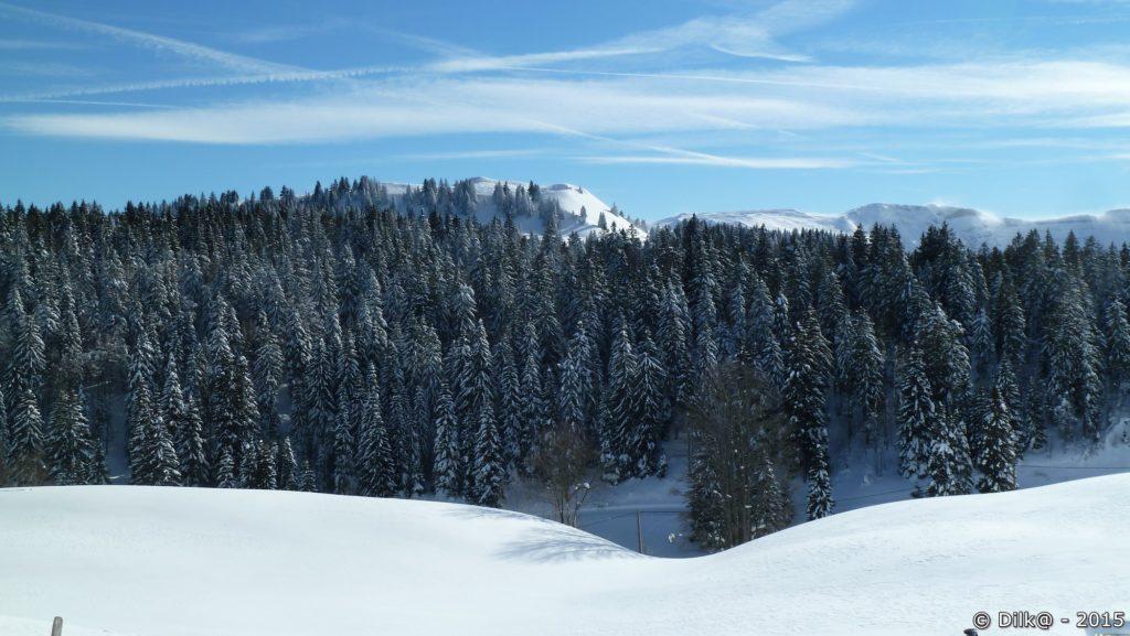 Les sapins sont saupoudrés de neige