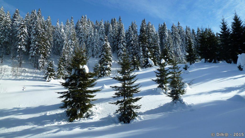 Jeux d'ombres et de lumière entre les sapins et la neige