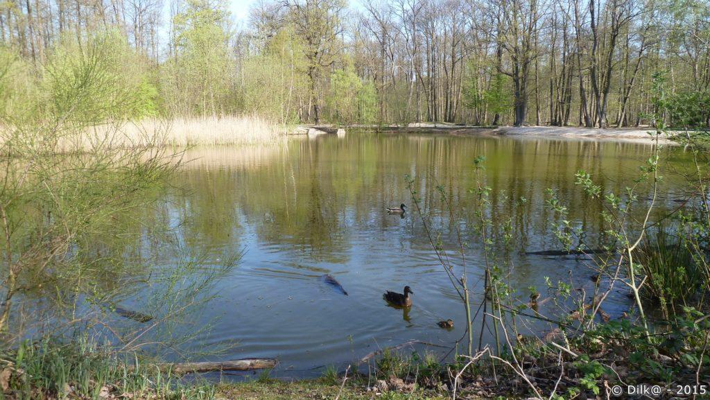 L'étang Godard