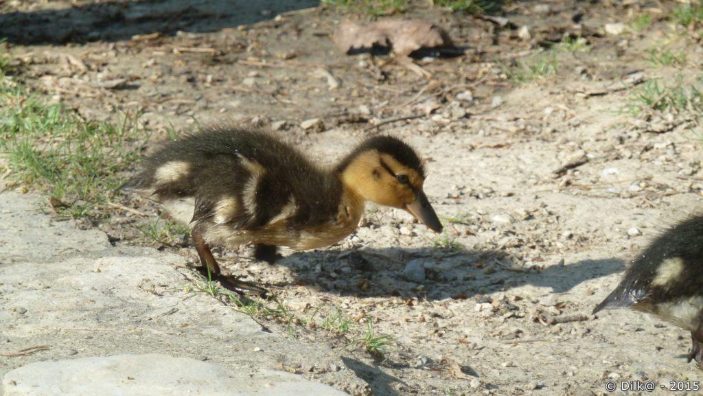 La petite famille s'aventure sur les berges de l'étang