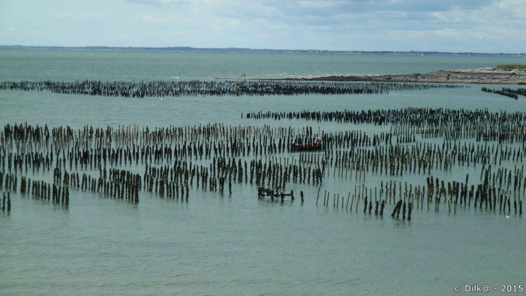 Les bouchots sont découverts à marée basse