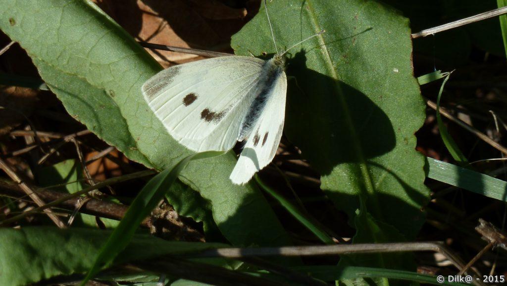 Papillon au bord du chemin
