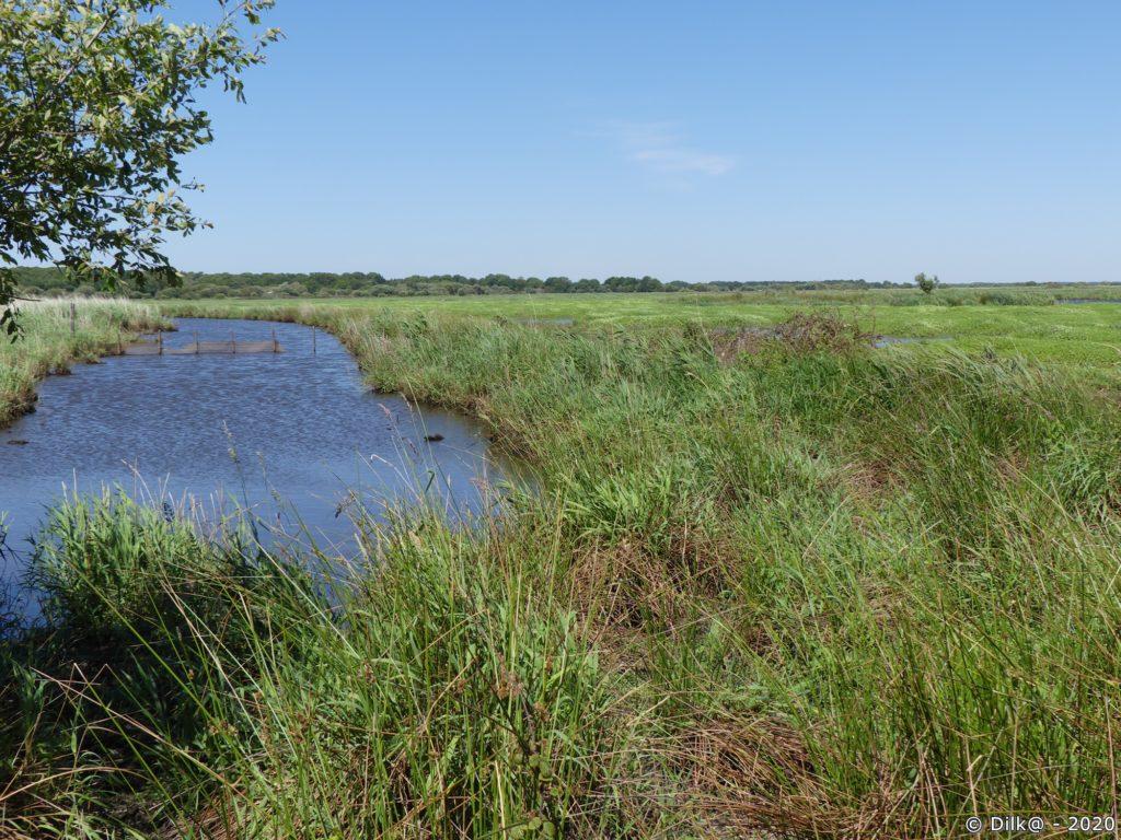 Un étier dans le marais de Brière